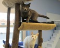 Two Cats on Cat Tree Branches
