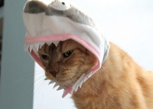 jeremiah-shark-hat