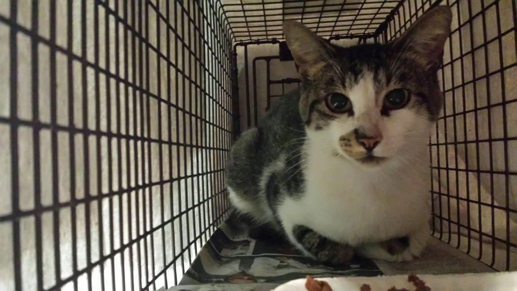 caretaking-cat-in-trap