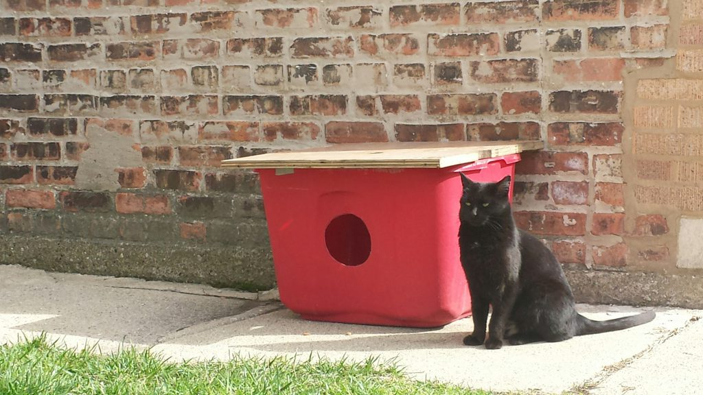 feral-cat-w-shelter