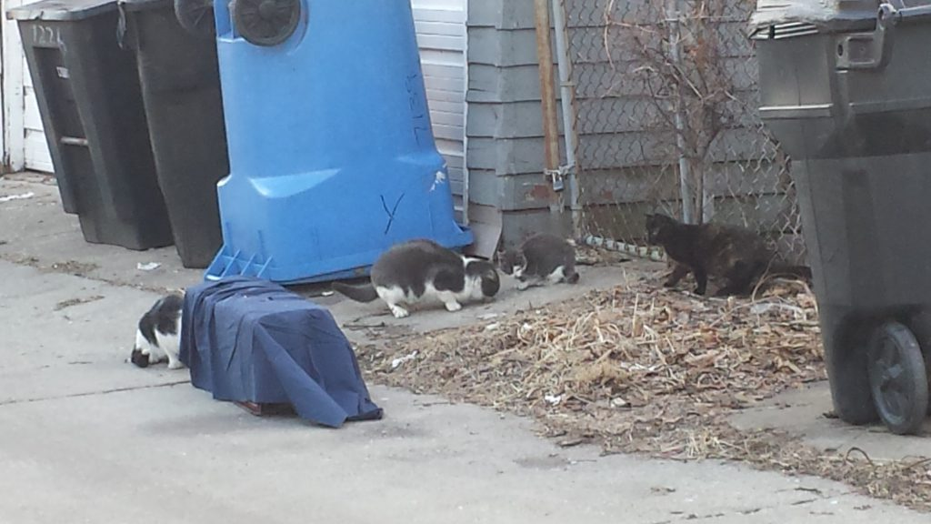 Community cats getting trapped