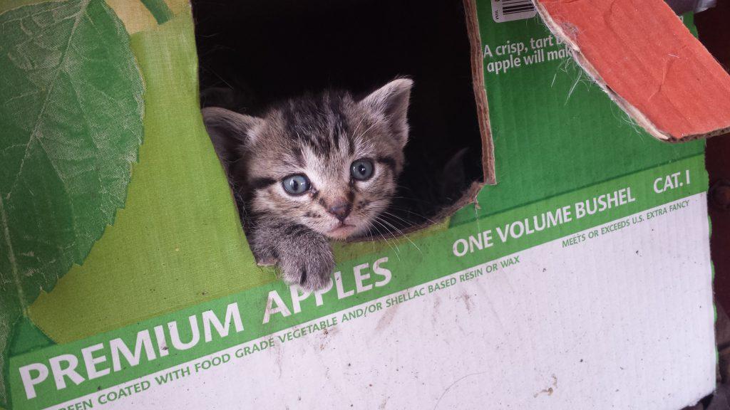 Kitten in backyard