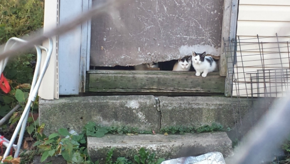 Dozens of Cats Roaming in a Chicago Neighborhood