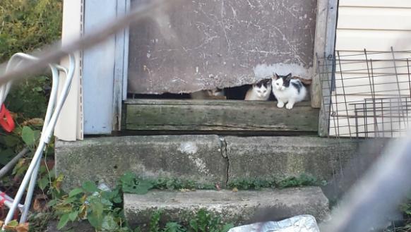 Dozens of Cats Roaming in a Chicago Neighborhood